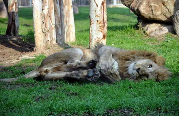 mavisehir-dergisi-aslan